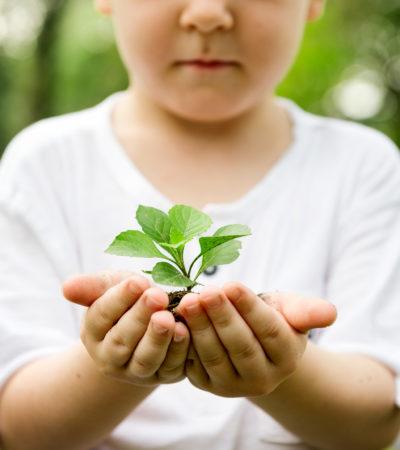 Baum-pflanzen