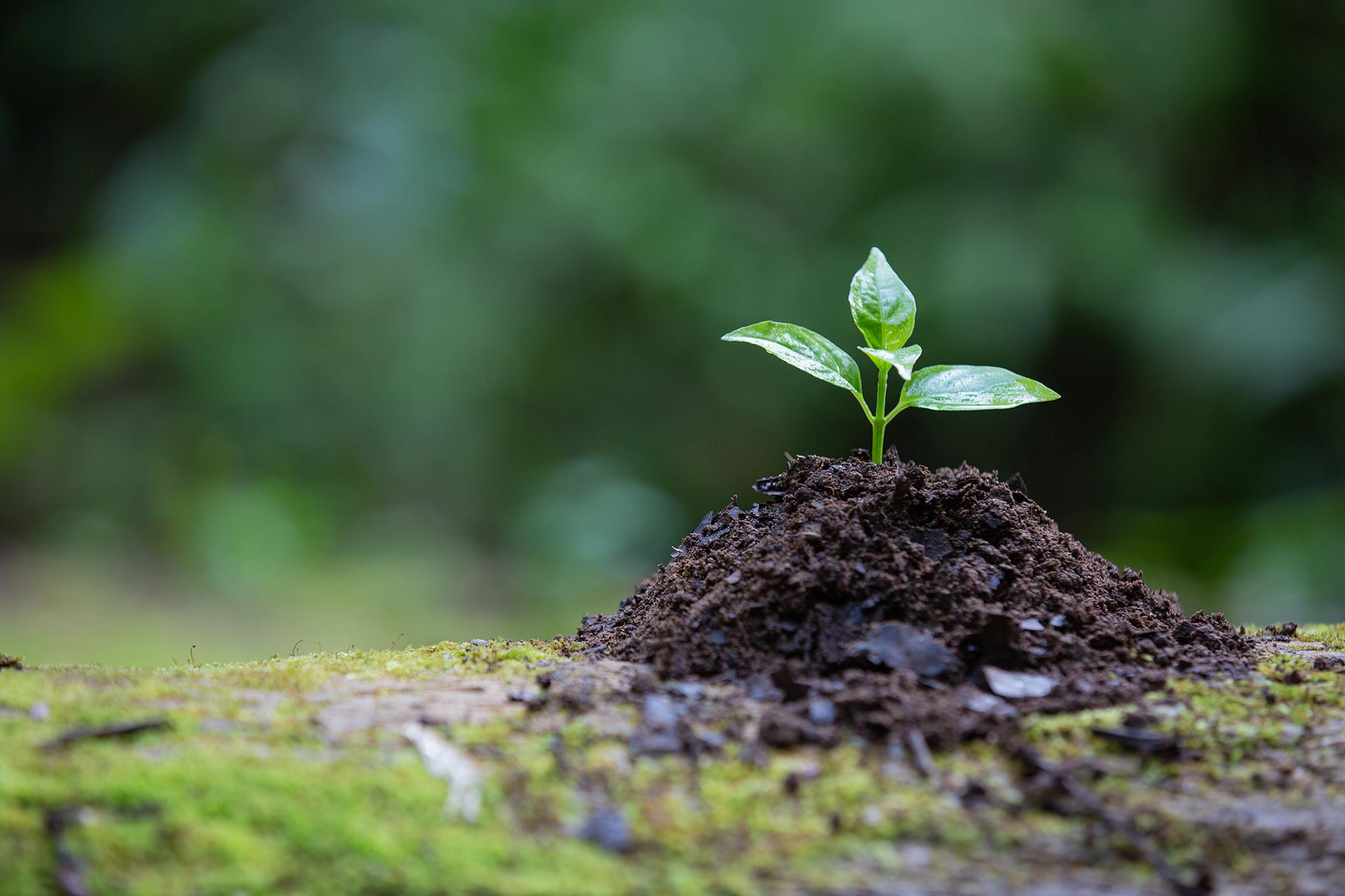Versprechen<br/>für die Umwelt